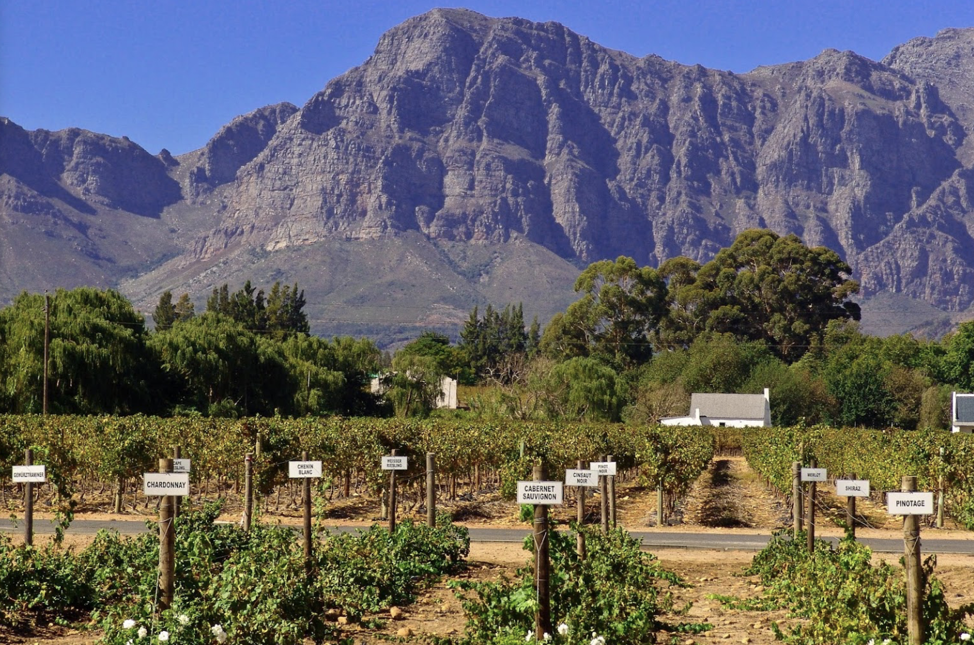Nederburg Vineyard